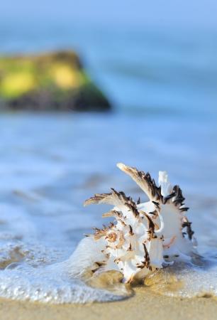 shell on beach Stock Photo - 15553436