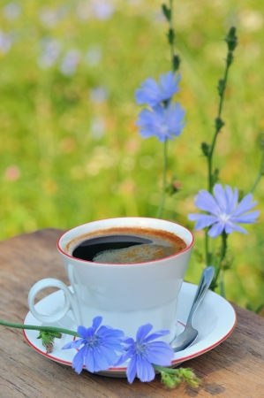 Chicory hot drink Stock Photo - 16475223