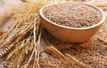 wheat seeds on rough material Stock Photo - 16477602