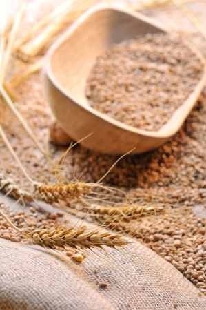wheat seeds on rough material Stock Photo - 16477858