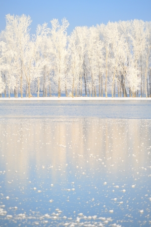 winter trees covered with frost Stock Photo - 16480141
