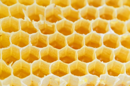 Honeycomb isolated on white  Stock Photo - 16475634