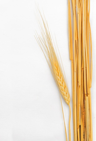 fascicle: Wheat isolated on white