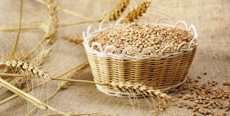 harvest wheat Stock Photo - 16481819