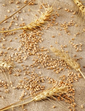 wheat on rough material Stock Photo - 16481340