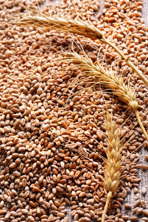 wheat seeds on rough material photo
