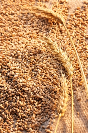 wheat seeds on rough material Stock Photo - 16482497