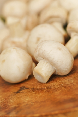 Champignons on background Stock Photo - 16481769