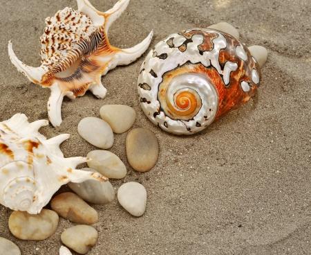 Starfish on sand Stock Photo - 16482244