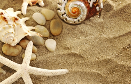 Starfish  and shells on sand Stock Photo - 16482258