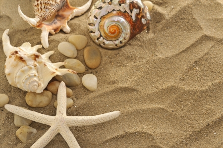 shells and stones on sand photo