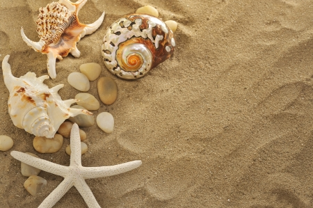 nautilus shell: shells and stones on sand Stock Photo