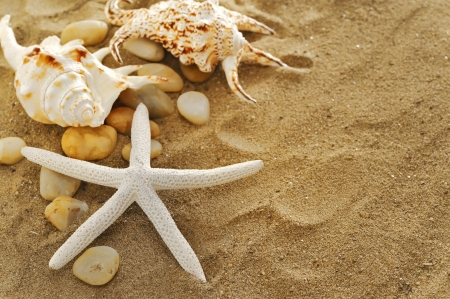 shells and stones on sand Stock Photo - 16480888