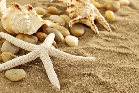 Starfish  and shells on sand Stock Photo - 16482188