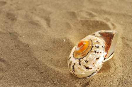 seashell on sand Stock Photo - 16482293