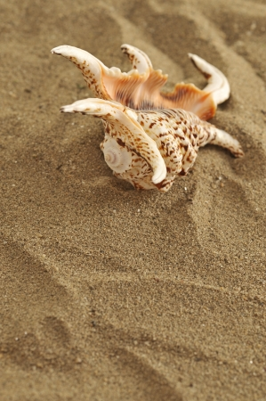 shell on the sand Stock Photo - 16482528