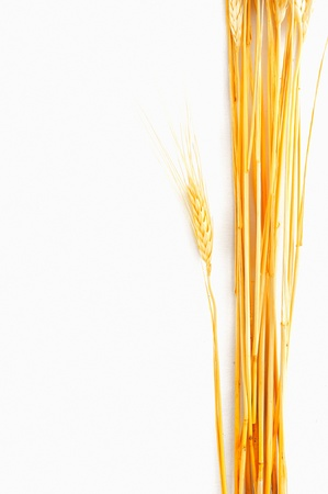 fascicle:  Wheat isolated on white  Stock Photo