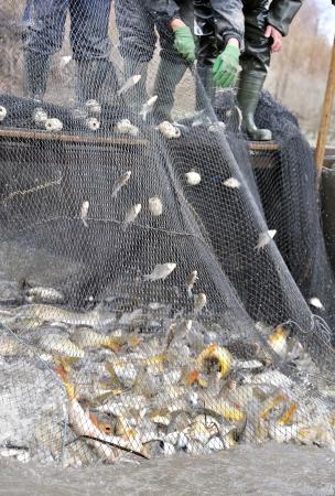 fishermen netting fish