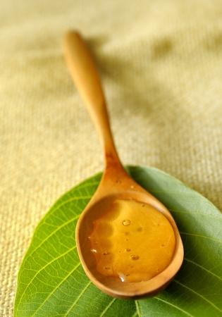 acacia honey Stock Photo - 16480789