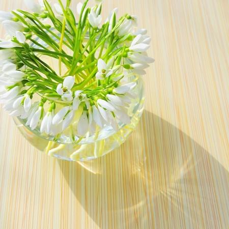Snowdrops in a vase Stock Photo - 16526608