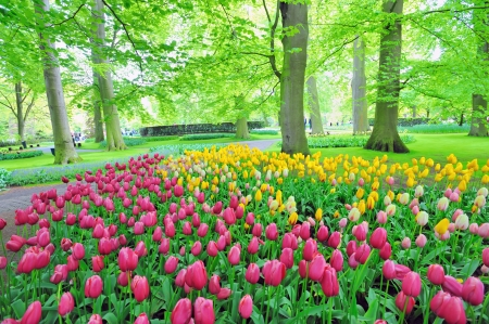 marvellous: Keukenhof gardens Stock Photo