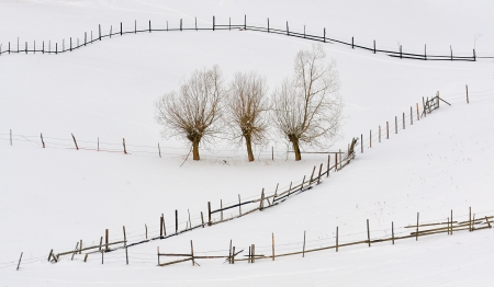 trees in winter time and fences Stock Photo - 17456902