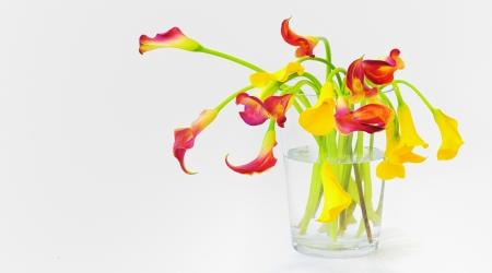 calla lilies in vase Stock Photo - 17456885