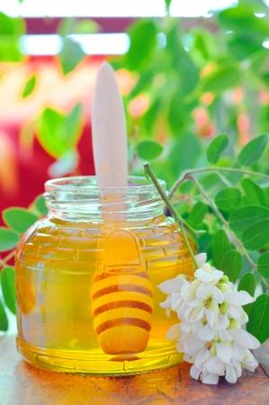 acacia honey Stock Photo - 17748270