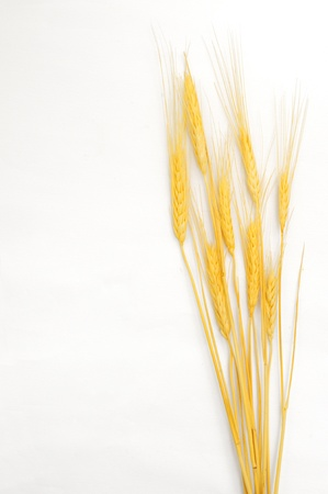 Wheat isolated on white Stock Photo - 18116384