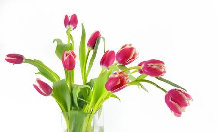 red tulips in vase Stock Photo - 18116347
