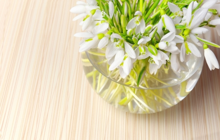 Snowdrops in a vase Stock Photo - 18116362