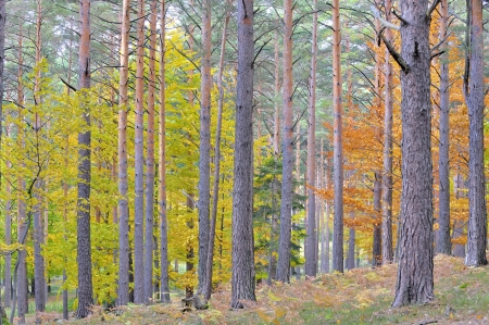 colors of autumn birch forest Stock Photo - 18247155