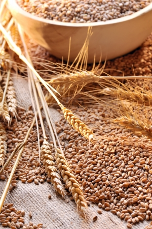 wheat seeds on rough material Stock Photo - 18247157