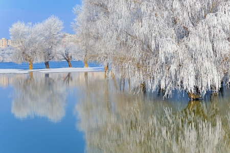 winter trees covered with frost Stock Photo - 18247153