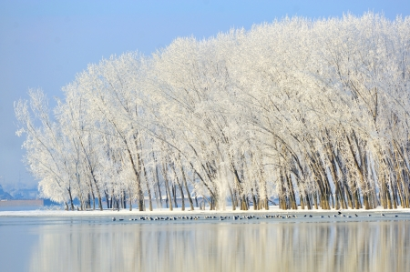 winter trees covered with frost Stock Photo - 18247154