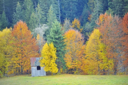colors of autumn birch forest Stock Photo - 18558603