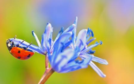 Single Ladybug on violet flowers Stock Photo - 18688796