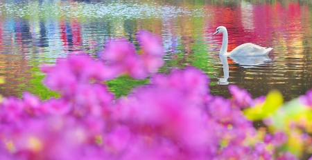 swan on water in mirror Stock Photo - 18688784