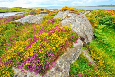 ireland landscape hdr shoot in summer time Stock Photo - 18841909