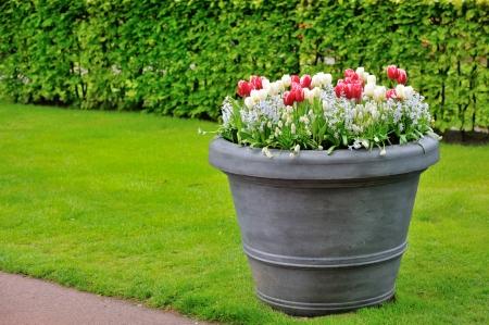 basket of spring flowers in garden shoot  Stock Photo - 19447671