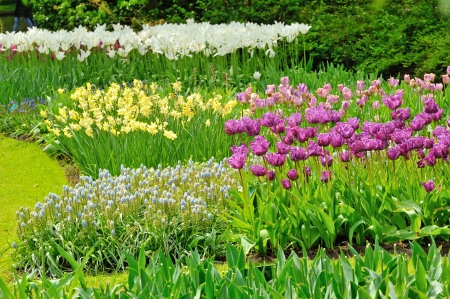 tulips field in different colors Stock Photo - 19447689