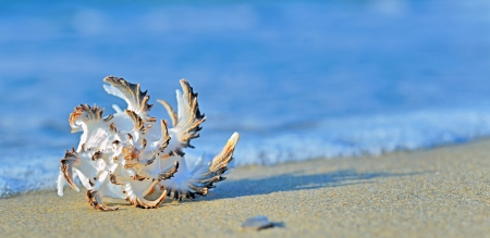 seashell on the seashore shoot in a natural background Stock Photo - 20423816