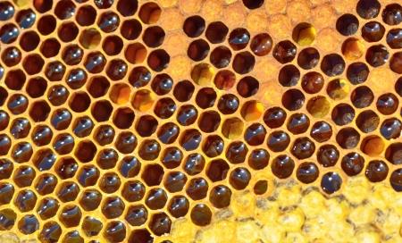 yellow beautiful honeycomb with honey, background Stock Photo - 20763969