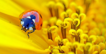 ladybug sits on a flower in summer time Stock Photo - 20764344