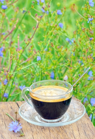 diet drink chicory is coffee substitutes Stock Photo - 20764345