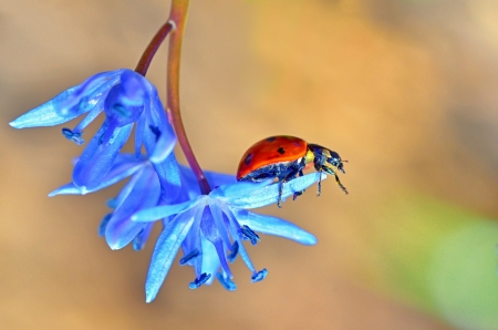 spring  and little ladybug and flowers photo