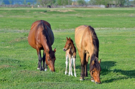 young foal with his mother in spring time Stock Photo - 20764364