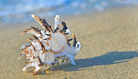 shell on the beach in summer time photo