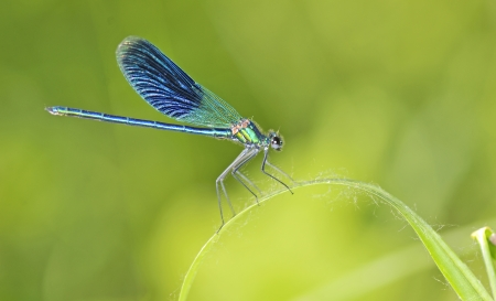 dragonfly on a blade of grass on natural background. Close up of insect Stock Photo - 20764454