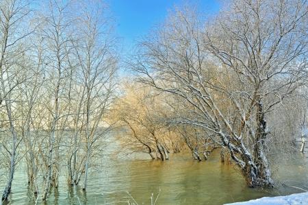 Frosty winter trees near Danube river Stock Photo - 20764483